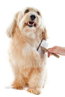 removing pet hair